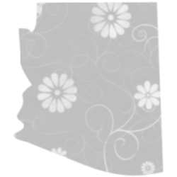 Arizona icon image gray